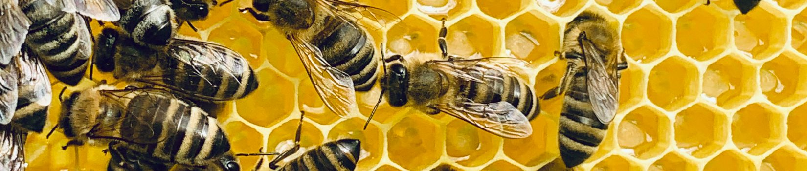 Bienengut Kohlstatt